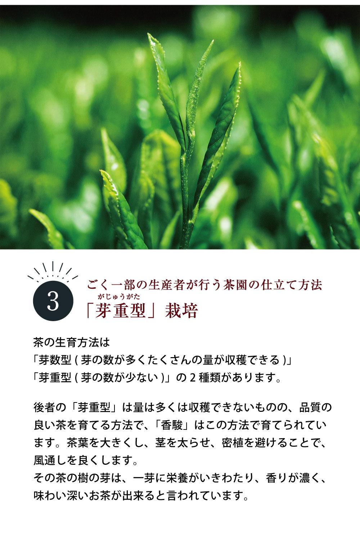 香駿の詳細�C