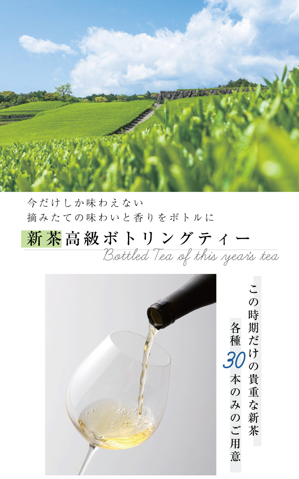新茶のボトリングティー 新茶 日本茶 高級なギフト 母の日の贈り物 父の日の贈り物